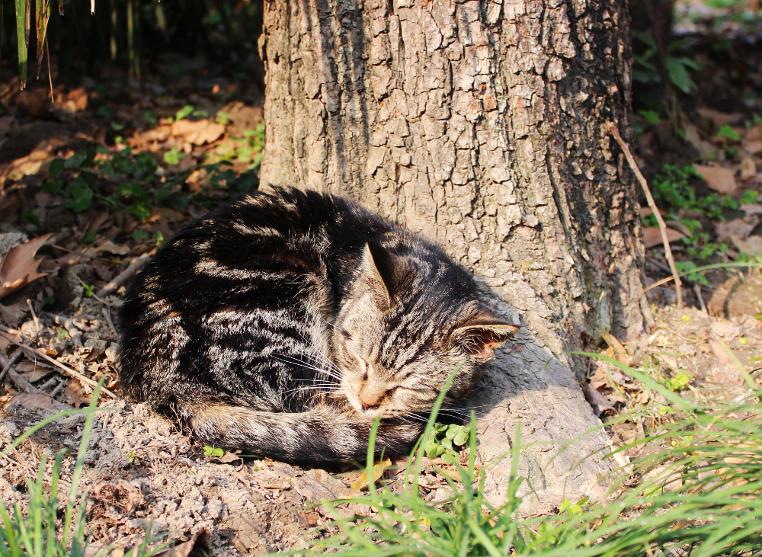 Katze im Zhongshan-Park